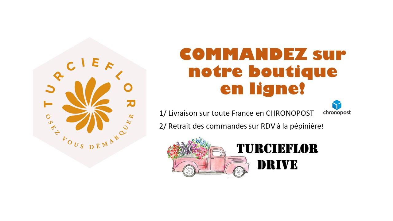 Profitez de notre drive pour commander vos plantes directement de notre production - Turcieflor - SARL Pierre Turc Horticulteur à Mazé (49) en Anjou!